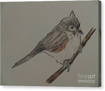 Tuffed Titmouse Canvas Print by Ginny Youngblood