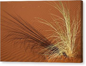 Tuft Of Grass Forms Shadow On Sand Canvas Print by Jaynes Gallery