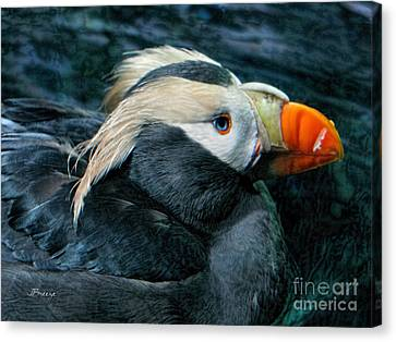 Tufted Puffin Profile Canvas Print by Jennie Breeze