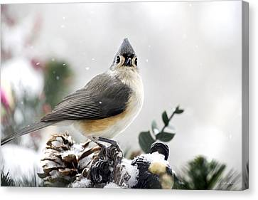 Tufted Titmouse In The Snow Canvas Print by Christina Rollo