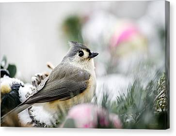 Titmouse Canvas Print - Tufted Titmouse Portrait by Christina Rollo