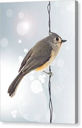 Tufted Titmouse Twinkle Canvas Print by Bill Tiepelman