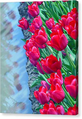 Tuip Reflections Canvas Print by John Bushnell