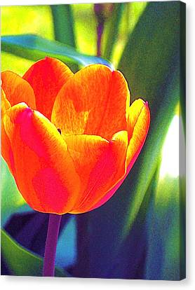 Canvas Print featuring the photograph Tulip 2 by Pamela Cooper