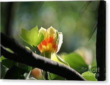 Tulip 3 Canvas Print