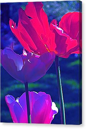Canvas Print featuring the photograph Tulip 3 by Pamela Cooper