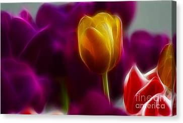 Tulip-6983 Canvas Print by Gary Gingrich Galleries