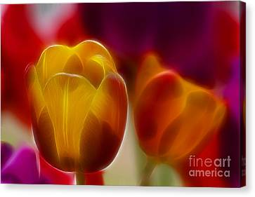 Tulip-7016-fractal Canvas Print by Gary Gingrich Galleries