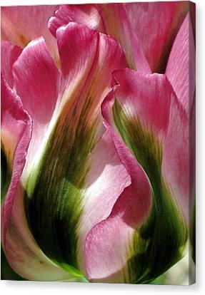 Tulip Canvas Print by  Andrea Lazar
