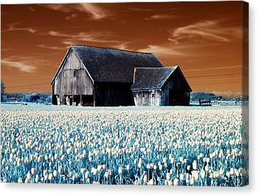 Tulip Barn Canvas Print by Rebecca Parker