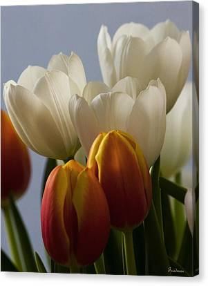 Tulip Bouquet Canvas Print by Michael Friedman