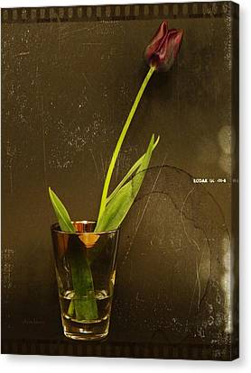 Tulip  Canvas Print by Chris Berry