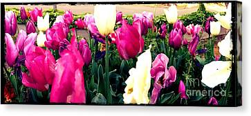 Canvas Print featuring the photograph Tulip Delight by Leslie Hunziker
