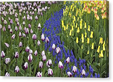 Tulip Design Canvas Print