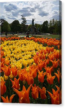 Tulip El Nino And Yellow Lily A Canvas Print by Brian Jones