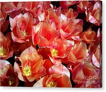 Tulip Festival - 39 Canvas Print by Hanza Turgul