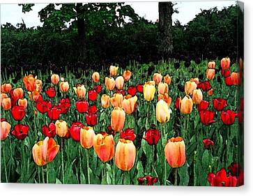 Canvas Print featuring the photograph Tulip Festival  by Zinvolle Art