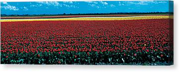 Tulip Field Near Spalding Lincolnshire Canvas Print by Panoramic Images