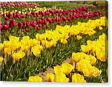 Tulip Field Canvas Print by Nur Roy