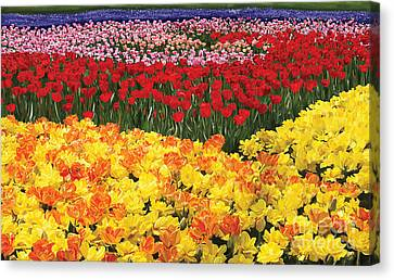Canvas Print featuring the digital art Tulip Field by Tim Gilliland
