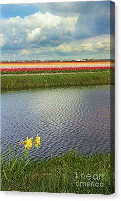 Tulip Fields 4 Canvas Print by Jasna Buncic