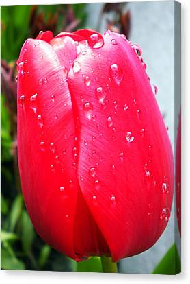 Canvas Print featuring the photograph Tulip Flower Rain Drops by Colette V Hera  Guggenheim