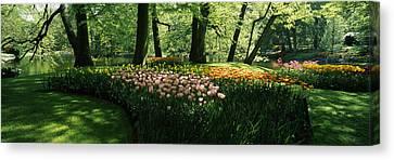 Tulip Flowers And Trees In Keukenhof Canvas Print