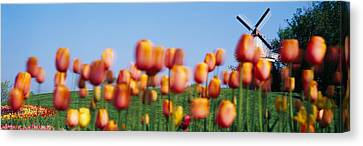 Tulip Flowers With A Windmill In The Canvas Print by Panoramic Images