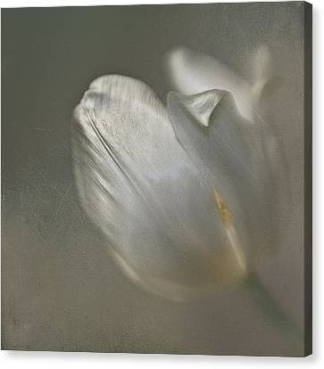Canvas Print featuring the photograph Tulip I by Kevin Bergen