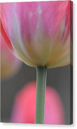 Tulip Illusions Canvas Print by Paul Miller