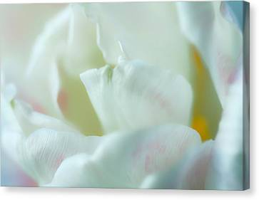 Canvas Print featuring the photograph Tulip by Jonathan Nguyen