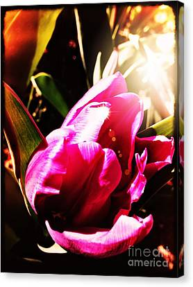 Canvas Print featuring the photograph Tulip by Leslie Hunziker