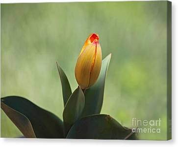 Canvas Print featuring the photograph New Beginning by Lisa L Silva