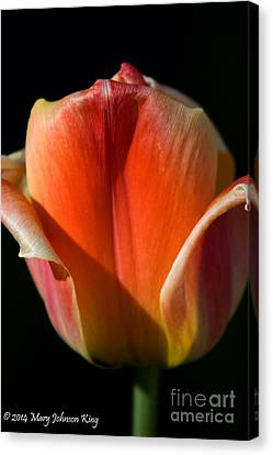 Mary King Canvas Print - Tulip On Black by Mary  King