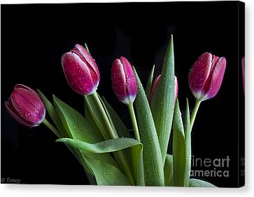 Tulip Paradise Canvas Print by Tracy  Hall