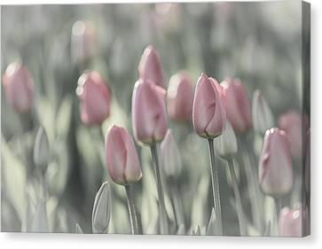 Tulip Patch Canvas Print
