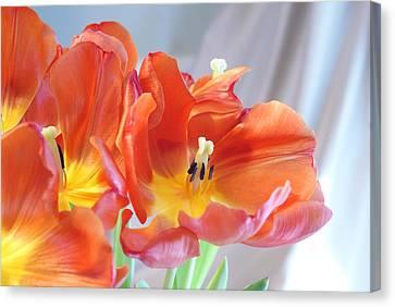 Tulip Profusion Canvas Print