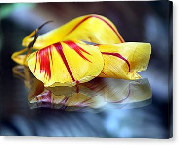 Tulip Reassembled 4 Canvas Print by  Andrea Lazar