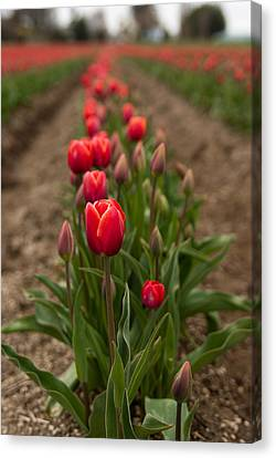 Canvas Print featuring the photograph Tulip Row by Erin Kohlenberg