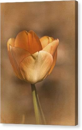 Tulip Tango Canvas Print by Richard Cummings
