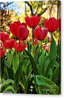 Tulip Time Canvas Print by Peggy Hughes