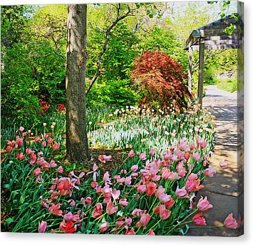 Tulip Trail Canvas Print
