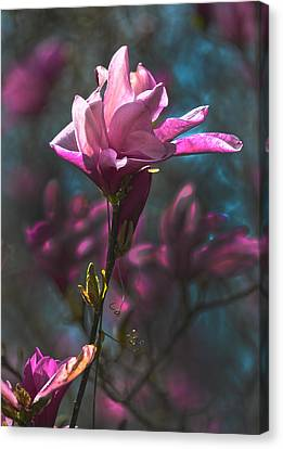 Tulip Tree Blossom Canvas Print by Sandi OReilly