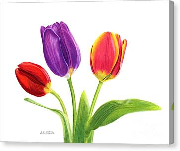 Trio Canvas Print - Tulip Trio by Sarah Batalka