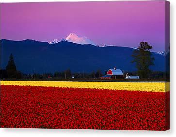 Tulip Twilight Canvas Print