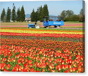Tulip Wagon Canvas Print