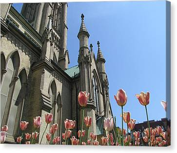 Tulip With The Church Canvas Print by Alfred Ng