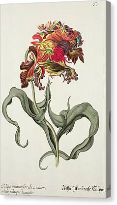 Red Leaf Canvas Print - Tulipa Monstrosa Rubra Maior by Johann Wilhelm Weinman