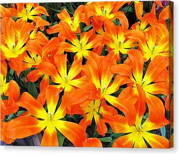 Canvas Print featuring the photograph Tulips 1 by Gerry Bates