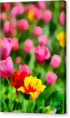 Tulips Canvas Print by Amy Cicconi